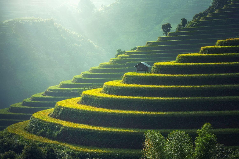Bali - Rice Terraces